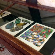 Insectes… [Pl. 5, Pl. 9, Pl. 12, Pl. 19] Séguy, Emile-Allain Paris, Duchartre [n.d.] Colored collotype Special Collections, 745 S456I